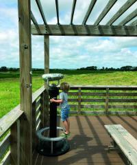 Marsh Wren Saline Wetland