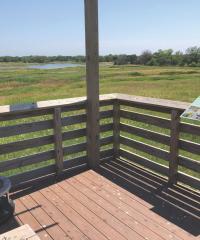 Marsh wren vantage point