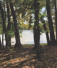Wooded shoreline
